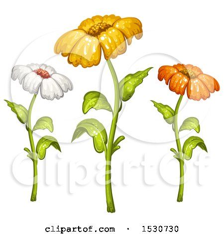 Clipart of a Trio of Daisy Flowers - Royalty Free Vector Illustration by merlinul