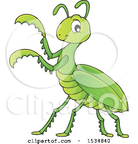 Clipart of a Green Praying Mantis - Royalty Free Vector Illustration by visekart