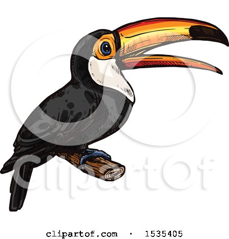 Clipart of a Sketched Perched Toucan Bird - Royalty Free Vector Illustration by Vector Tradition SM