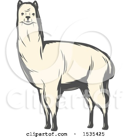 Clipart of a White Llama, in Retro Style - Royalty Free Vector Illustration by Vector Tradition SM