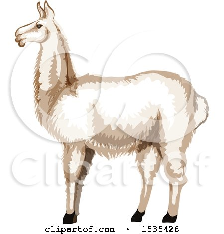 Clipart of a White Llama - Royalty Free Vector Illustration by Vector Tradition SM