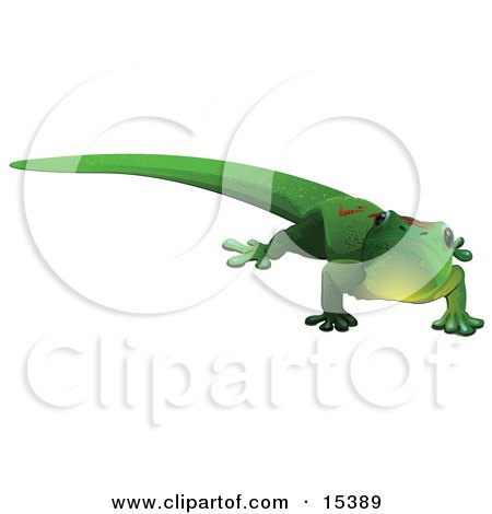 Cute Green Gecko Lizard With Red Markings On His Back, Looking Outwards Clipart Image Picture by Leo Blanchette