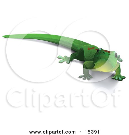 Cute Green Gecko Lizard With Red Markings On His Back, and a Shadow Under His Belly, Looking Outwards Clipart Image Picture by Leo Blanchette