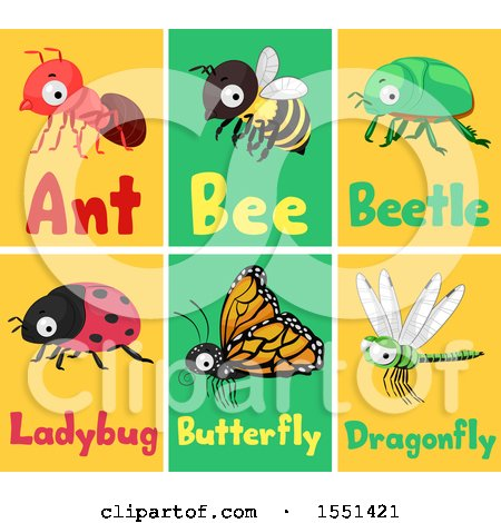 Clipart of Ant, Bee, Beetle, Ladybug, Butterfly and Dragonfly Flash Cards - Royalty Free Vector Illustration by BNP Design Studio