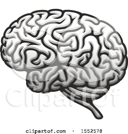 Clipart Of A Brain Human Anatomy Royalty Free Vector Illustration