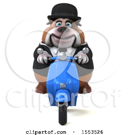 Clipart of a 3d Gentleman or Business Bulldog Riding a Scooter, on a White Background - Royalty Free Illustration by Julos