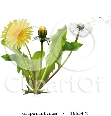 Clipart of a Breeze Blowing Wishey Blow Seeds from a Dandelion Plant - Royalty Free Vector Illustration by dero