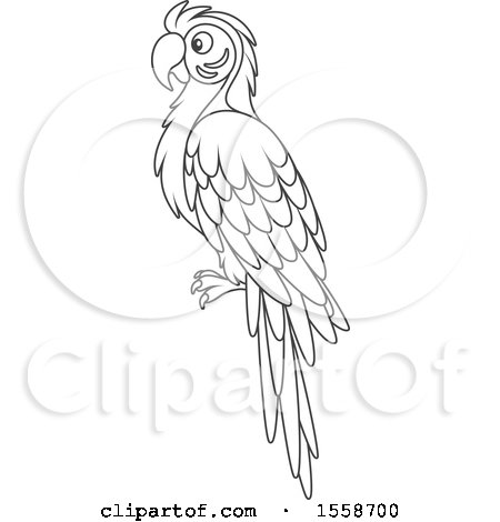 Clipart Of A Lineart Blue And Yellow Macaw Parrot
