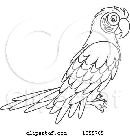 Clipart of a lineart scarlet macaw parrot royalty free for Scarlet macaw coloring page