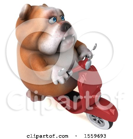 Clipart of a 3d Bulldog Riding a Scooter, on a White Background - Royalty Free Illustration by Julos