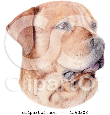 Clipart of a Portrait of a Dog - Royalty Free Illustration by Maria Bell