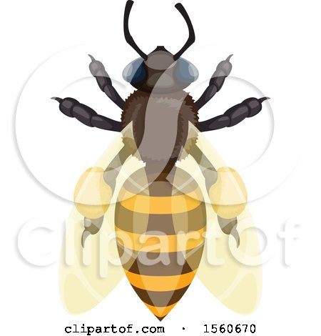 Clipart of a Honey Bee - Royalty Free Vector Illustration by Vector Tradition SM