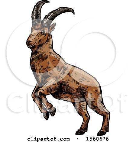 Clipart of a Sketched Goat - Royalty Free Vector Illustration by Vector Tradition SM