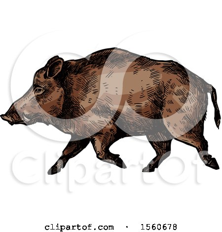 Clipart of a Sketched Boar Walking - Royalty Free Vector Illustration by Vector Tradition SM