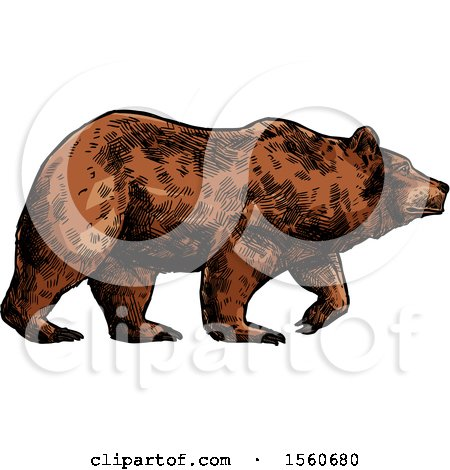 Clipart of a Sketched Bear Walking - Royalty Free Vector Illustration by Vector Tradition SM