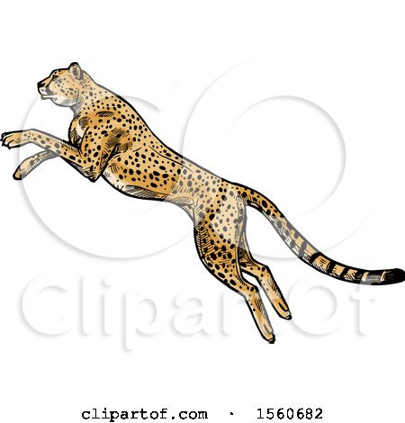 Clipart of a Sketched Cheetah Pouncing - Royalty Free Vector Illustration by Vector Tradition SM