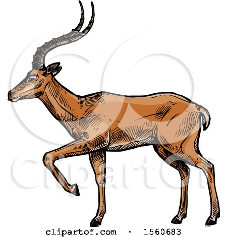 Clipart of a Sketched Gazelle - Royalty Free Vector Illustration by Vector Tradition SM