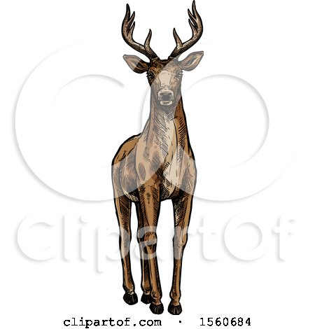 Clipart of a Sketched Buck Deer - Royalty Free Vector Illustration by Vector Tradition SM