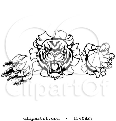 Clipart of a Black and White Vicious Tiger Mascot Slashing Through a Wall with a Basketball - Royalty Free Vector Illustration by AtStockIllustration