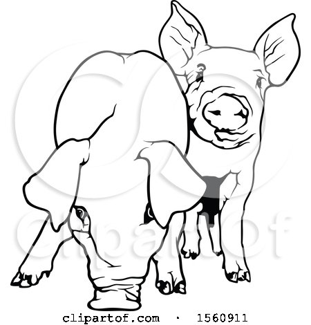 Clipart of Black and White Pigs - Royalty Free Vector Illustration by dero