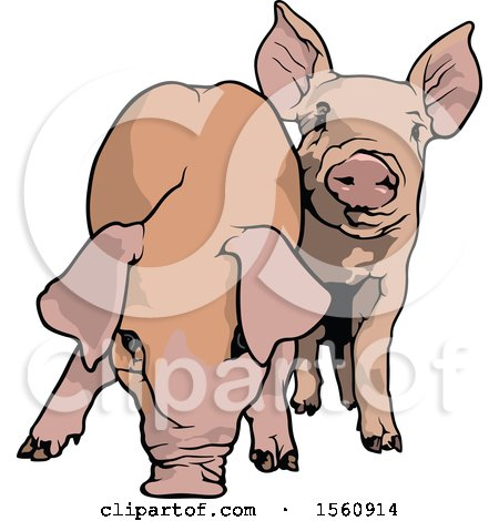 Clipart of Pigs - Royalty Free Vector Illustration by dero
