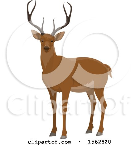 Clipart of a Buck Deer - Royalty Free Vector Illustration by Vector Tradition SM