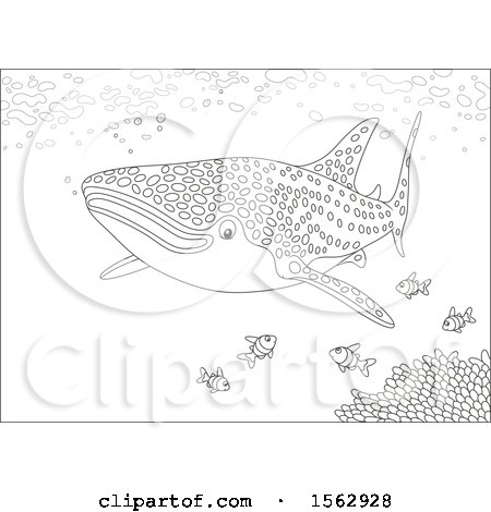 Clipart of a Lineart Whale Shark and Fish over a Reef - Royalty Free Vector Illustration by Alex Bannykh