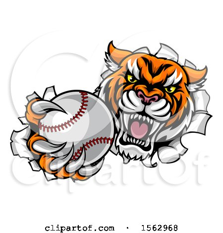Clipart of a Vicious Tiger Mascot Breaking Through a Wall with a Baseball - Royalty Free Vector Illustration by AtStockIllustration