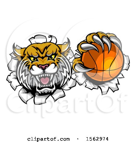 Clipart of a Vicious Wildcat Mascot Breaking Through a Wall with a Basketball - Royalty Free Vector Illustration by AtStockIllustration