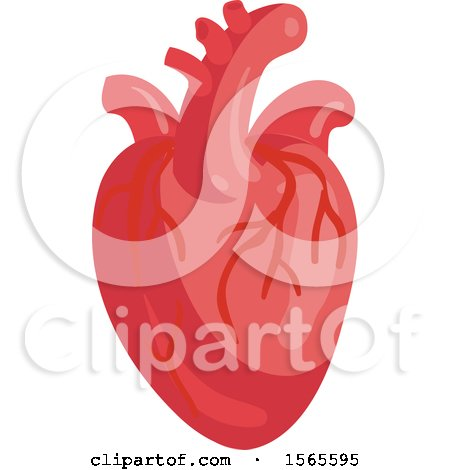 Clipart of a Human Heart - Royalty Free Vector Illustration by Vector Tradition SM