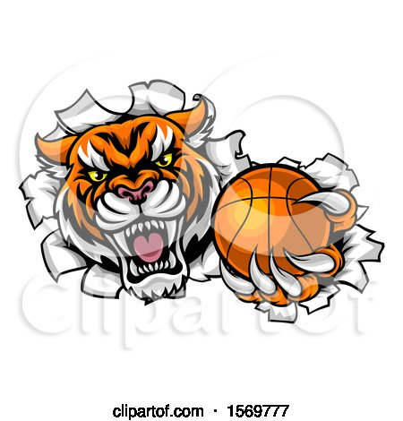 Clipart of a Vicious Tiger Mascot Breaking Through a Wall with a Basketball - Royalty Free Vector Illustration by AtStockIllustration