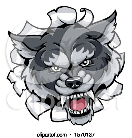 Clipart of a Gray Wolf Mascot Breaking Through a Wall - Royalty Free Vector Illustration by AtStockIllustration