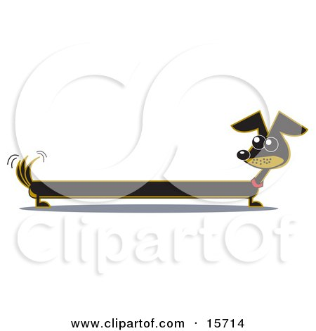 Very Long Dachshund Dog Looking Back at His Tail Posters, Art Prints