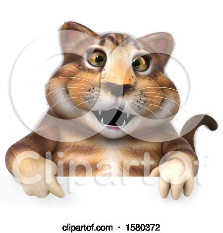 Clipart of a 3d Tabby Kitty Cat over a Sign, on a White Background - Royalty Free Illustration by Julos