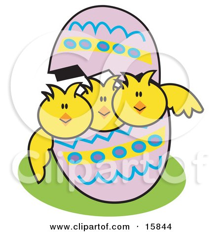 Three Baby Chicks Peeping Out Of A Colorful Easter Egg Posters, Art Prints
