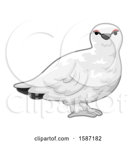 Clipart of a White Ptarmigan Bird - Royalty Free Vector Illustration by BNP Design Studio