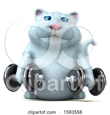 Clipart of a 3d White Kitty Cat Holding Dumbbells, on a White Background - Royalty Free Illustration by Julos