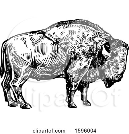 Clipart of a Sketched Black and White Bison - Royalty Free Vector Illustration by Vector Tradition SM
