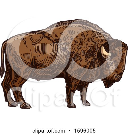 Clipart of a Sketched Bison - Royalty Free Vector Illustration by Vector Tradition SM