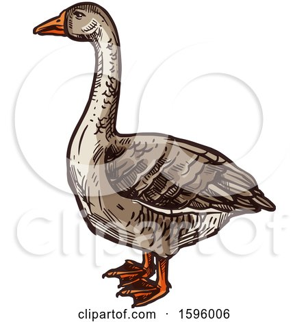 Clipart of a Sketched Goose - Royalty Free Vector Illustration by Vector Tradition SM