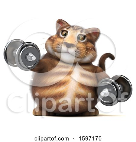 Clipart of a 3d Tabby Kitty Cat Holding Dumbbells, on a White Background - Royalty Free Illustration by Julos