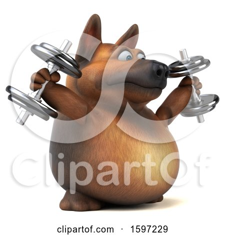 Clipart of a 3d German Shepherd Dog Working out with Dumbbells, on a White Background - Royalty Free Illustration by Julos
