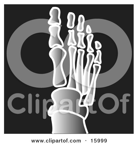 Xray of Toes on a Foot Clipart Illustration by Andy Nortnik