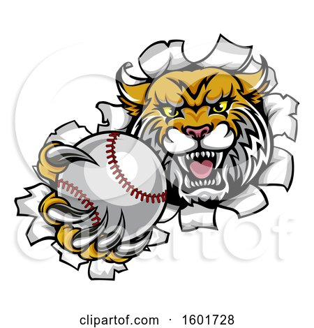 Clipart Of A Vicious Wildcat Mascot Breaking Through A Wall With A