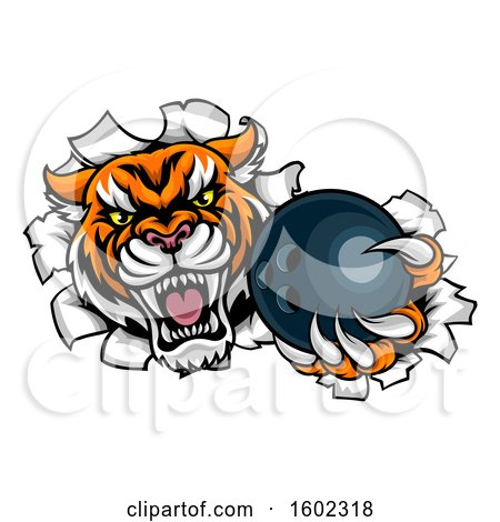 Clipart of a Vicious Tiger Mascot Breaking Through a Wall with a Bowling Ball - Royalty Free Vector Illustration by AtStockIllustration