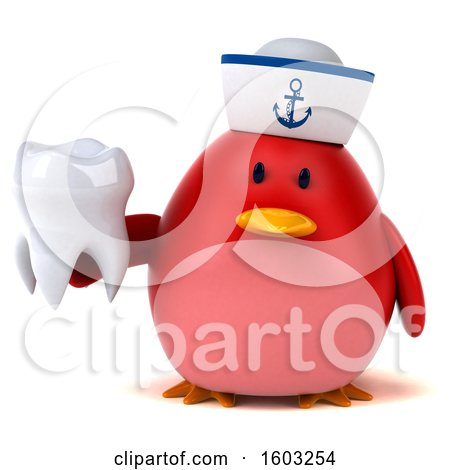 Clipart of a 3d Chubby Red Bird Sailor Holding a Tooth, on a White Background - Royalty Free Illustration by Julos