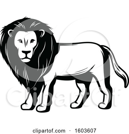 Clipart of a Male Lion in Black and White - Royalty Free Vector Illustration by Vector Tradition SM