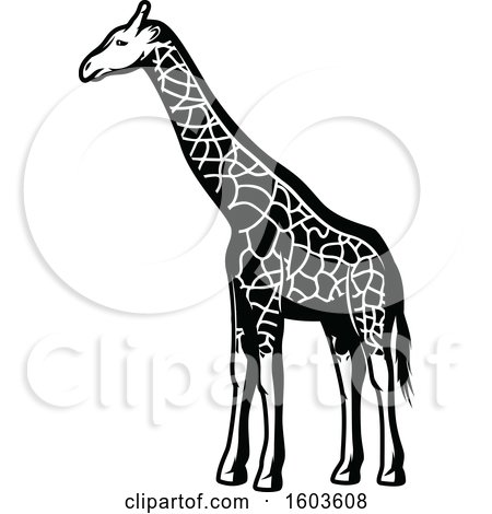 Clipart of a Giraffe in Black and White - Royalty Free Vector Illustration by Vector Tradition SM