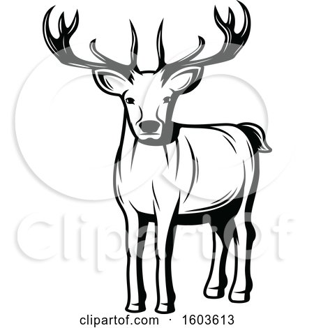 Clipart of a Buck Deer in Black and White - Royalty Free Vector Illustration by Vector Tradition SM