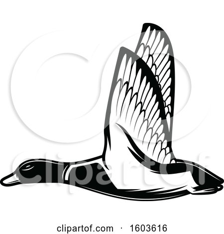 Clipart of a Flying Duck in Black and White - Royalty Free Vector Illustration by Vector Tradition SM